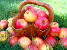 День яблока в Англии
